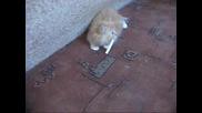 Лудо коте пафка цигарa : D : D : D