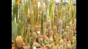 Кактусите - Бодливата Красота