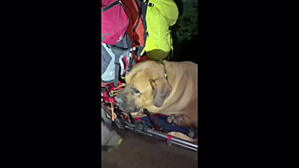 Ruff day! Massive mastiff rescued from Utah trail