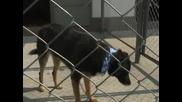 Приют за бездомни кучета в София