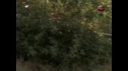 Кобра 11 - 1x04 - Убийство и Злополука - 1ч (бг аудио) 18+