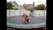 Куче скача на батут