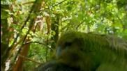Папагал се чифтосва с фотограф