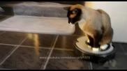 Котката не си поплюва - Смях