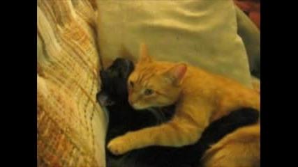 Котки Се Прегращат И Целуват (Вечна любов)