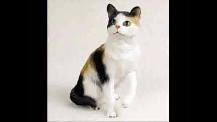 Котките На Кекерица
