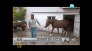 Пловдив без каруци
