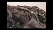 Змия Убива И Изяжда Заек - Интересно!