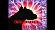 Ork.pit Bull 2009