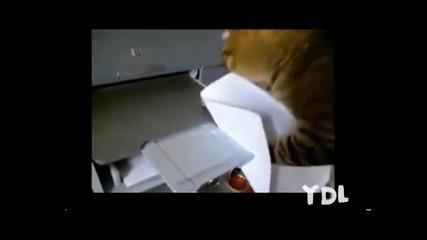 Смешна компилация от котки (заслужава си)
