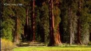 Sunrise Earth - Sequoia Light ( Part 4 / 5 ) * H D *