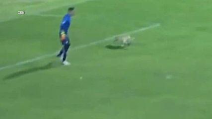 Щастливо куче на футболен мач