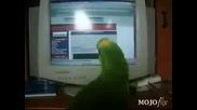 Папагал Имитира Смях