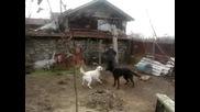 Две Кучета Се Борят