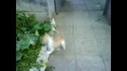 сладки котета :)