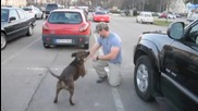 Kуче посреща стопанина си
