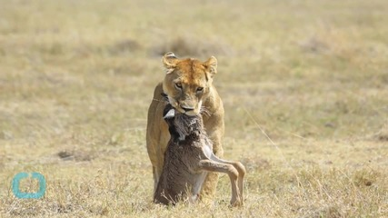 Snapshots of Serengeti Wildlife Let Citizen Scientists Shine