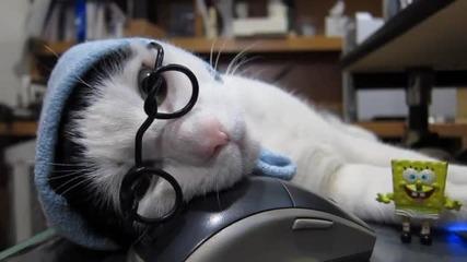 Готино котенце си почива върху мишка .. Сладур ..