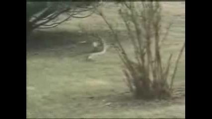 Rabbit vs Snake Winner Rabbit