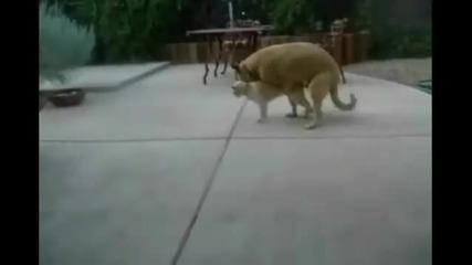 Котката остана без думи
