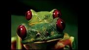 Джанго Зе - Луди жаби