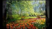 Цветелина - Пролет бяла Tzvetelina - Prolet byala