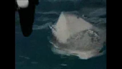 Сцена От Филма Shark Attack 3 Megalodon