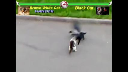Смъртоносна Битка - Бяла Котка Vs Черна Котка