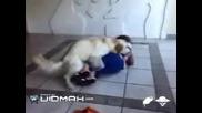 Kуче изнасилва жена :д (смях)