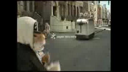 мишки рапират - реклама на Kia