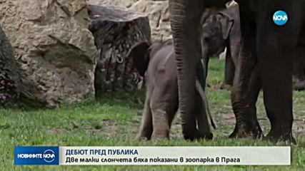 Две малки слончета направиха дебют пред публика в зоопарка в Прага