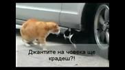 Котки се карат