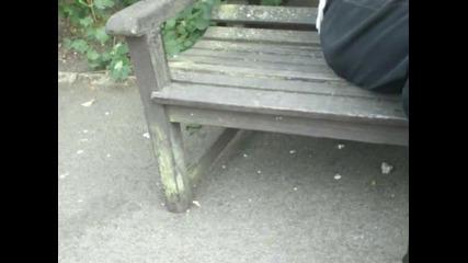 Лондонска крадлива катерица