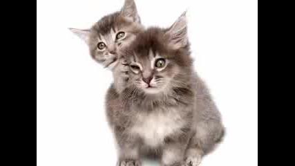 Kitty Said What? Remix