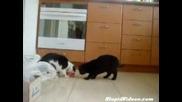 Много Смешни Котки - Май Не Се Обичат