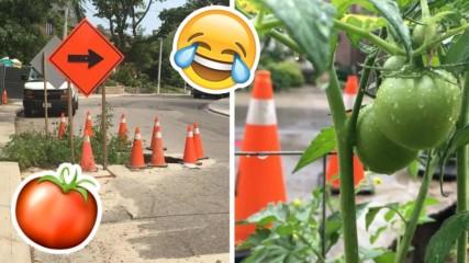 Гавра! Общинари не запълниха дупка, граждани засадиха домати!