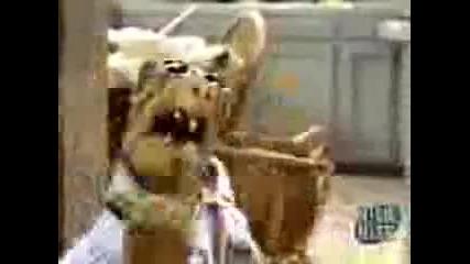 Alf - Пародия Смях!