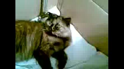 Котка С Тикове