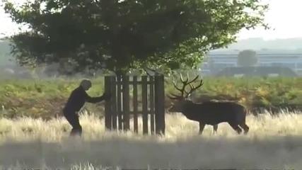Елен Лопатар vs суровояд Вегетарианец природолюбител...