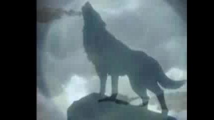 Снимки На Вълци