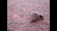 Люспест мравояд