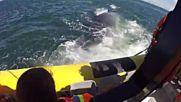 Син кит накара туристи в лодка да изтръпнат!