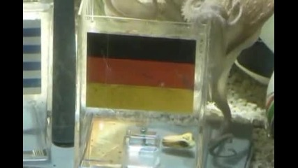 Октопода паул - Германия 3 ти