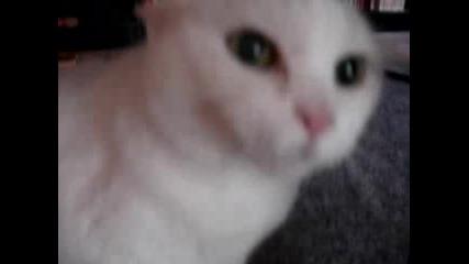 Коте испаднало в истерия .. мноуу смях