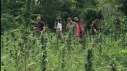 Jamaica Cannabis 2015 - Everything about- Weed, Marijuana, Ganja (full Documentary Hd) ☮ Freedom Tv