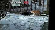 Бой между опусум и котка-смях!