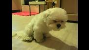Най-измореното куче в света - Смях
