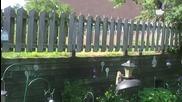 Катерица направи фамозен скок за да се докопа до храната на птиците