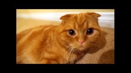 Компилация Най-смешните Котки - Много Смях!