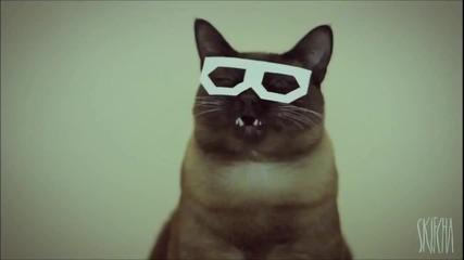 Котката Дъбстеп